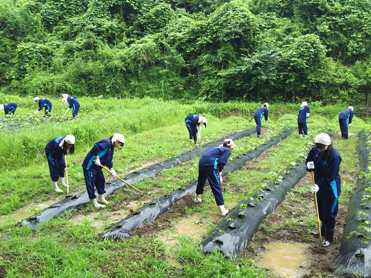 耕地の除草をする高校生たち